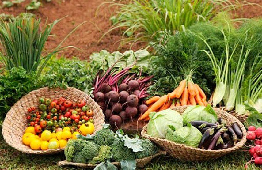 Optimizar la venta de tu producción agrícola está en tu mano.